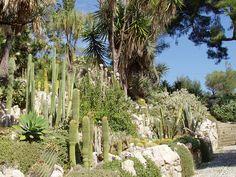 Giardini Botanici Hanbury - cacti - Botanischer Garten Hanbury – Wikipedia