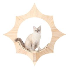 Cat Wall Shelves, Cat Steps, Cat Climbing, Wooden Cat, Cat Room, Cat Supplies, Cat Tree, Cat Furniture, Furniture Ideas