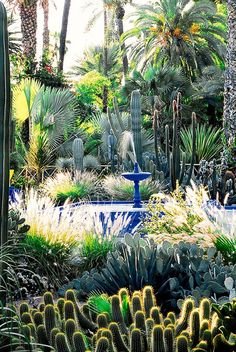 The garden was originally planted by the French artist Jacques Majorelle in the 1930s, but Yves Saint Laurent made it his own when he moved to Marrakech in 1980.  #MAJORELLE GARDEN