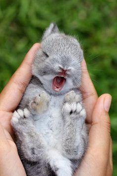 Un lapin mignon baille