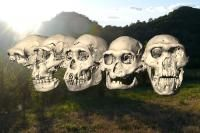 This is a computer reconstruction of the five Dmanisi skulls (background: Dmanisi landscape).  Credit: Picture: Marcia Ponce de León and Christoph Zollikofer, University of Zurich, Switzerland