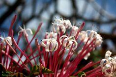 Blume in einem Park in Miami