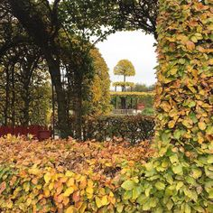 #Fall in the formal gardens. #kasteelmuiderslot