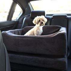 Animals Matter® Companion Car Seats® Now you and your Companion can travel safely, comfortably and in style with our original and patented Animals Matter® Companion Car Seat® Molded to fit the exact s