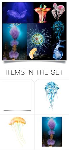 """Under The Sea Life Jellyfish"" by jeneric2015 ❤ liked on Polyvore featuring art"