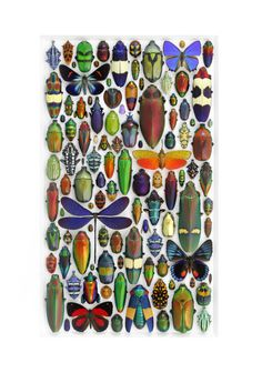 Pheromone Gallery – Insect Art #bugs #insects #nature