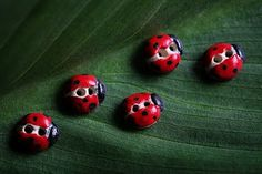 Incomparable Ladybird buttons