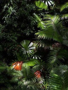 Daintree National Park - North Queensland | ©Imi Koetz (Australia)-