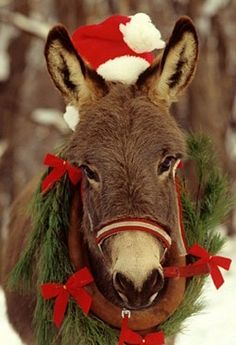 Christmas Donkey=LOVE!