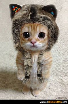 OMG~ this is the cutest kitty pic so far!!!