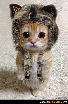 Gatito disfrazado de león. ¿No es para comérselo?