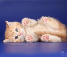 Inspiring picture cats, cute animals, kitten. Resolution: 604x443. Find the picture to your taste!
