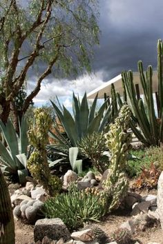Cactus garden of Roy Dowell and Lari Pittman in Los Angeles; photo by Jeff Spurrier...great arrangement of plants.  Very interesting.  Textures are great and color variations, too.  Really enjoyed this photo!