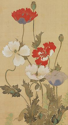 Poppies Suzuki Kiitsu (Japanese, Period: Edo period Date: century Culture: Japan Japanese Artwork, Japanese Prints, Botanical Art, Botanical Illustration, Poster Mural, Art Chinois, Japan Painting, Art Asiatique, Japanese Flowers