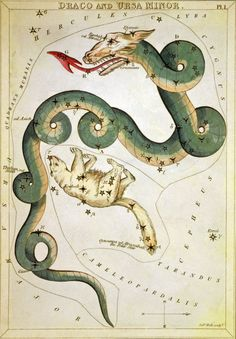 Hydra Stars Heightened In Gold Map Maker Johannes Hevelius Place - Star map maker