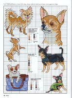 Gallery.ru / frango - album Animal mir.400 portraits and motifs for embroidery <3 Chihuahuas <3
