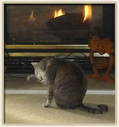 1000 Images About Feline Kidney Disease On Pinterest