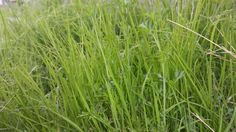 #nature #garden #grass #beautiful #Iraq