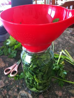 How to keep herbs fresh & ready to use for up to a year! Chop fresh organic herbs with kitchen scissors, pack the chopped herbs tightly in a clean glass screw top jar. Put in the freezer. Voila! This goes for coriander, chives, mint, parsley, sweet basil.