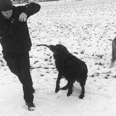 #dog #u8p #puppy #pup #dogtraining #workingdog #dogtrekking #instagood #dogs_of_instagram #pet #pets #animal #animals #petstagram #petsagram #dogsitting #photooftheday #dogsofinstagram #ilovemydog #instagramdogs #nature #dogstagram #dogoftheday #lovedogs #lovepuppies #hound #dogtricks #doglover #instapuppy #instadog