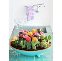 Confira esta seleção de 10 plantas pequenas ideais para mesa de centro - ótimas para dar um toque natural no ambiente interno!