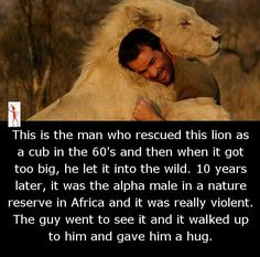 The man wild lion hugs in