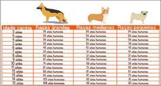 A maioria das pessoas que tem cachorro em casa, considera o animal como um membro da família.Não é à toa que ele é considerado o