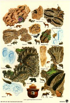 Animal Tracks poster from the U.S. Forestry Service.