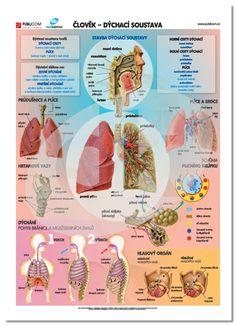 Montessori, Einstein, Diy And Crafts, Preschool, Classroom, Map, Children, Biology, Anatomy