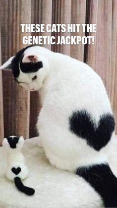 Cute Wild Animals, Cute Kawaii Animals, Cute Little Animals, Cute Funny Animals, Cute Little Baby, Animals And Pets, Cute Baby Cats, Cute Cats And Kittens, Kittens Cutest