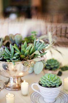 succulents in teacups-- love