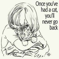 I was a 'dog person'. Until an amazing cat came along.