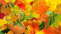 HD Abundance Of Fall Colors Wallpaper | Download Free - 60021