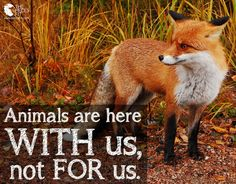 Animals are here WITH us, not FOR us.