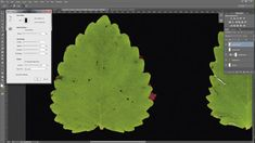 How to extract leaf textures with Photoshop