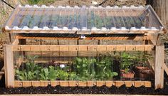 Cold frame with vegetables growing inside