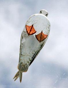seagull.jpg 690×889 pixels