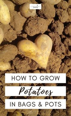 How to grow your own potatoes in bags or containers - includes simple step-by-step instructions plus harvesting advice. #growyourown #gardeningtips #growingfamily