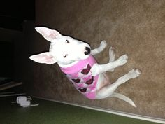 Preppy little Bullie in an argyle (hearts instead of diamonds!) sweater.
