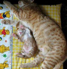 <3 ginger kitties