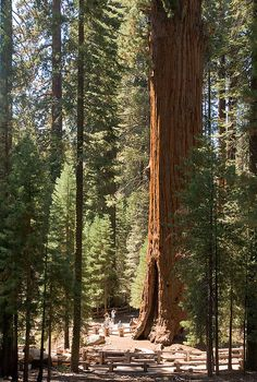'Land of Giants' - by satosphere, via Flickr; Sequoia National Park, California