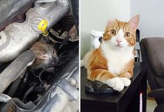 Mr. Biscuits Tried To Get Warm In A Car Engine And Was Burned Badly When The Car Drove Away. Now He's Recovered
