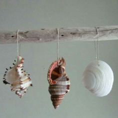 Set of 3 shells ornaments for a perfectly coastal Christmas!  www.driftingconcepts.com