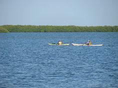 Kayaking off the Dunedin Causeway with Honeymoon Island State Park in the background. Honeymoon Island, St Pete Beach, Tampa Bay Area, Clearwater Beach, Florida Beaches, State Parks, Kayaking, Georgia, Boat