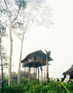 Tree house, West Papua