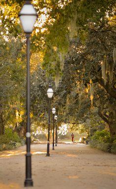 hueandeyephotography:  Walkway, Hampton Park, Charleston, SC © Doug Hickok All Rights Reserved More here… hue and eye
