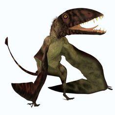 Dimorphodon flying pterosaur Canvas Art - Corey FordStocktrek Images (28 x 28)