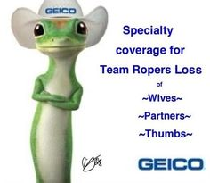 Geico Quotes This Little Guy Is Just Tooooo Cutethe Geico Insurance Gecko .