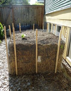 straw bale planting solution. In past years just lined up the straw bales in a row, and planted in them as they composted. This year set up in more square formation, wrapped in mesh wire, staked and topped with previously composted straw bale and new compost.