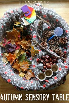 Create an Autumn sensory table using natural materials for kids to explore the colours, textures...
